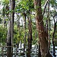 Forêt inondée en Amazonie